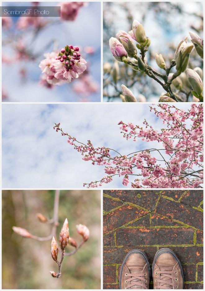 spring primavera flowers flores