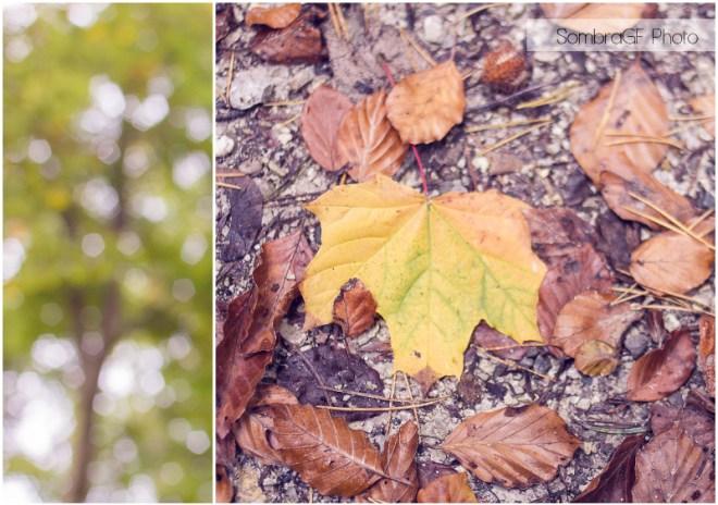 autumn bern switzerland focus forest leaf otoño