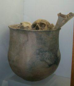 Huesos ancestrales en el Museo Antropológico de Quíbor Francisco Tamayo.