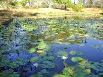 Laguna de los lotos, en el JBM. Foto Sec. Ambiente, GBZ.