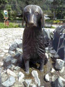 Vista frontal del perro Copito, mayo 2017. Foto Samuel Hurtado Camargo
