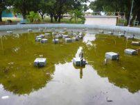 Fuente abandonada del parque Los Mangos, en la ciudad de Barinas, capital del estado Barinas, Venezuela.
