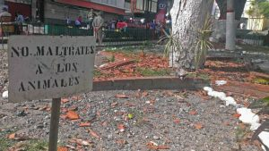 Solo un cartel queda de la variada fauna de la plaza Bolívar de Valera. Activo patrimonial en riesgo. Venezuela.