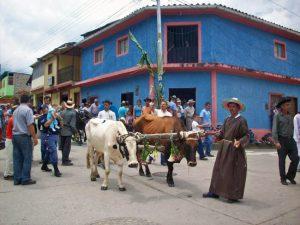Los bueyes son parte de la procesión de San Isidro en Táchira. Foto en el blog Riobobense, del hist. José Antonio Pulido, 2015.