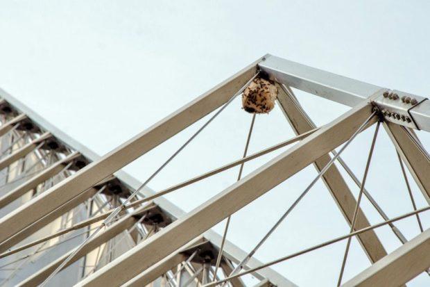 Un nido de avispas en la obra de Alejandro Otero ubicada en Plaza Venezuela, Caracas. Foto Luis Chacín, mayo de 2019.