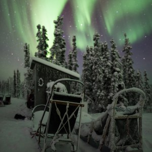 Aurora, Sled, Print, Sale, Fairbanks