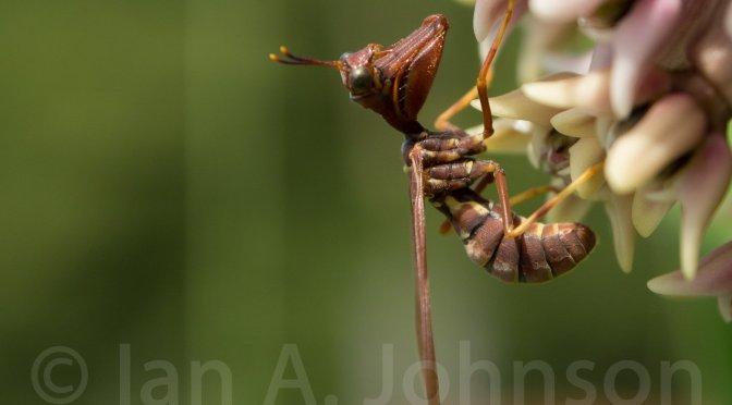 A Short Documentation of Life on A Milkweed Plant