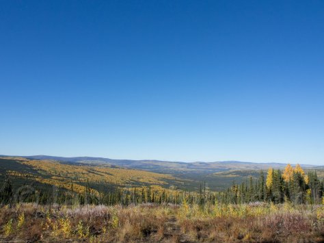 A view of the landscape from Ester Dome. The birches and spruce are incredible. Plus... no clouds!