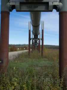 Alaska pipeline. Here you can see the radiators as well as the teflon pads.