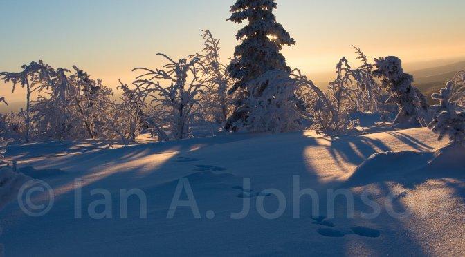 Snowshoeing in the Alaskan Winter Wonderland