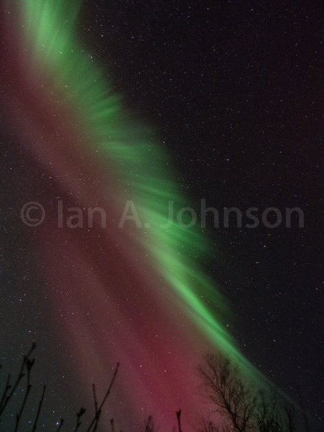 The watermelon aurora.