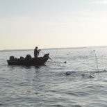 One of the ways to capture sea ducks is to decoy them into a mist-net. Here, the works on a net during morning capture