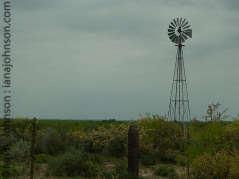 This mill still pumped some water which provided a spark of life for the birds in this mostly arid spot