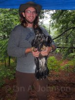 A wet day to be a biologist and eaglet chick! This bird has been outfitted with a GSM transmitter to better understand its movements