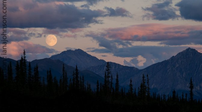 The Loon, The Moon, The Fox, and The Dalton Highway