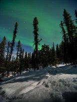 Snowshoe Aurora