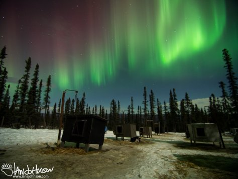 I guess these dogs were already tired of great aurora displays ;). Shot at Black Spruce Dogsledding