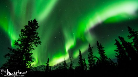 A huge flare of northern lights dance across the sky in Denali National Park