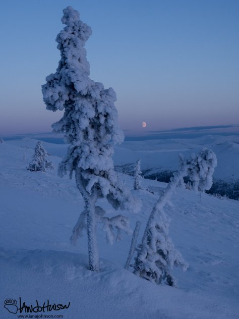 A beautiful moon splits some spruce trees in the alpine tundra of Twelvemile Summit