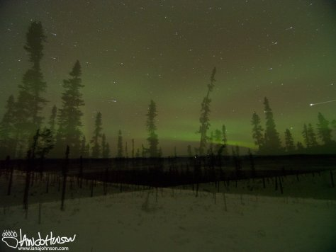Ghost-like trees stand sentinel in this long exposure pan of an aurora lit landscape.