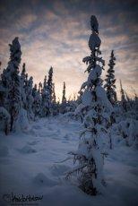 November 14th : Sunset in a winter wonderland