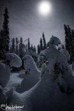 November 27th : Moonlit Wonderland