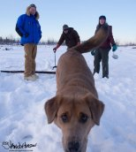 February 15th : Ice companions