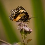 March 17th : Master Pollinator