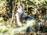 April 30th : Spring Hare