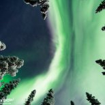 A gorgeous flare of aurora overhead as seen through a gap in the spruce forest.
