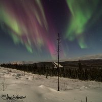 """Divide"" - the aurora is seemingly split in half by the points of this spruce!"