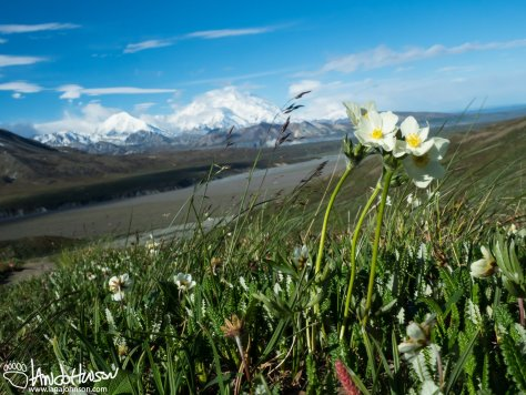 Alpine Tundra and Denali