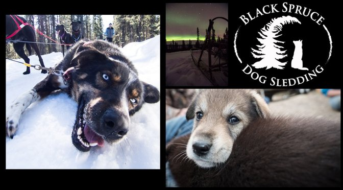 Heart to Heart with Black Spruce Dog Sledding