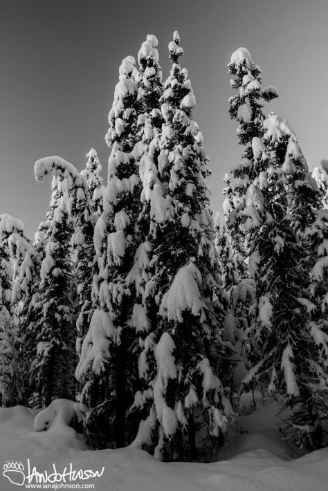 Black and White Winter Wonderland