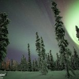 The aurora creeps in over the Dog Yard of Black Spruce Dog Sledding.