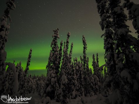 Snow Covered Aurora