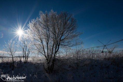 Hoar Frost in the Field.