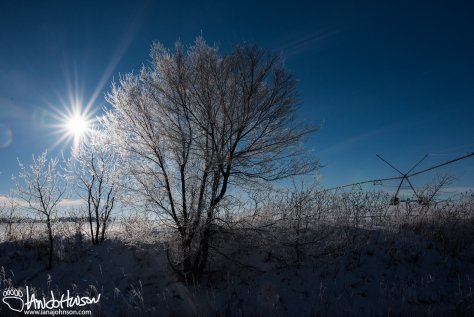 Hoar Frost in the Field.