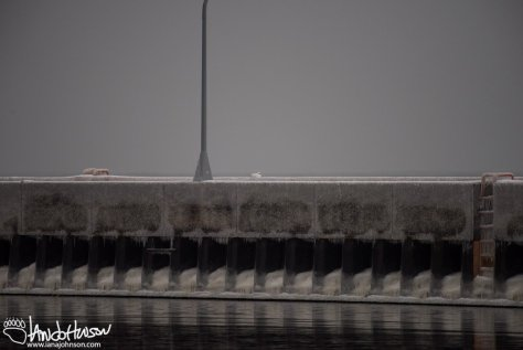 Ivory Gull, Duluth