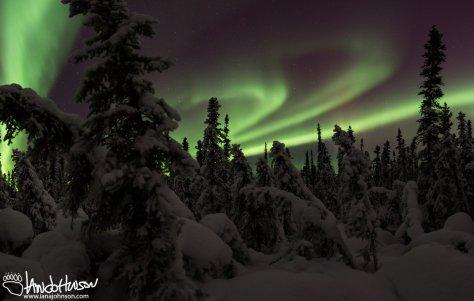 Aurora Borealis Panorama