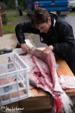 Halibut are nearly pure muscle. They produce incredible fillets!