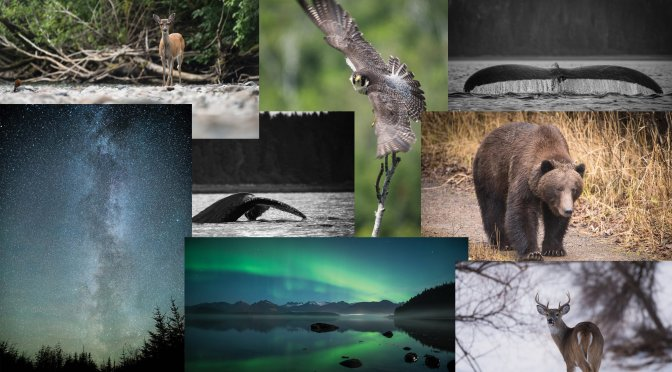 Alaska, Top Shots, Aurora, Wildlife