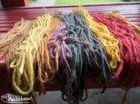 Mushroom, Dye, Yard, Rainbow, Colors