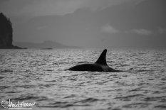 Orca, Hoonah, Alaska