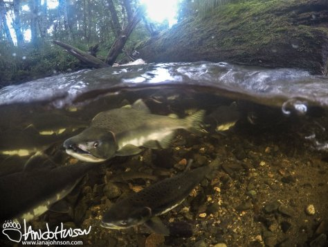 Salmon, Alaska, Rain,