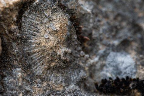 Chichagof Island, Fossil, Devonian