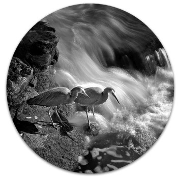 The patience of Heron and time management on the Mahurangi River fishing for white bait. by ian anderson.