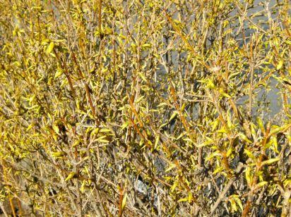 april-13-yellow