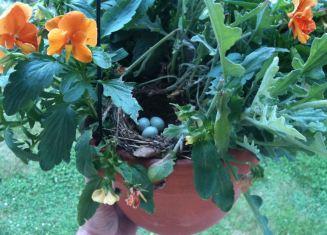 june-29-eggs-in-the-pot