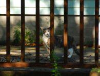 september-5-behind-bars